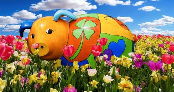 Glücksschwein auf einer Wiese