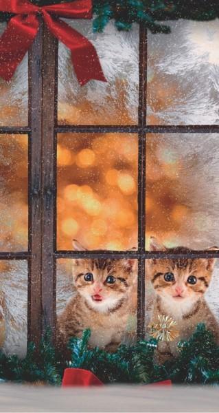 Zwei Kätzchen im Fenster
