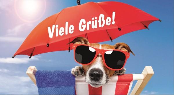 Hund mit Sonnenbrille chillt