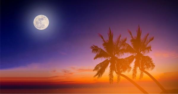 Palmen im Mondschein