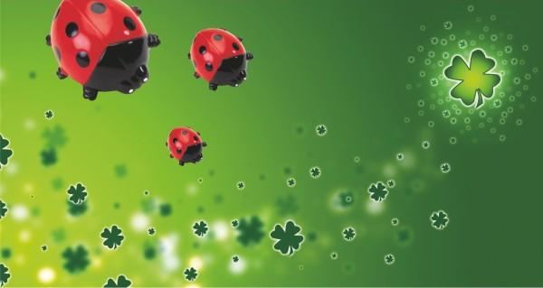 Käfer auf grünen Hintergrund