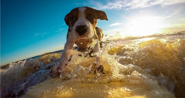 Ein Hund als Wellenreiter