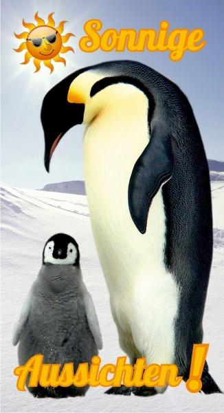 Sonnige Aussichten Pinguine