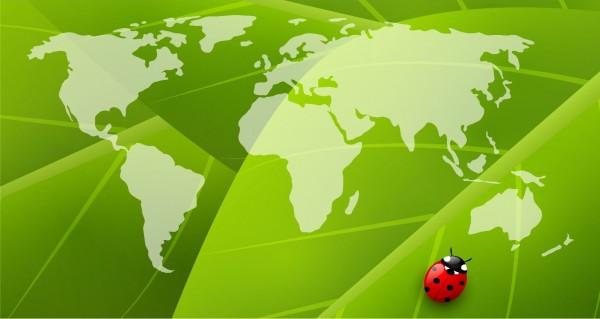 Käfer auf einer Weltkarte