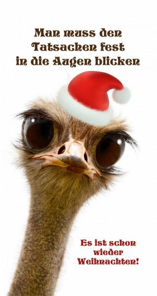 Ist schon wieder Weihnachten