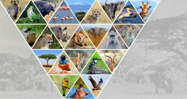 afrikanische Tiere als Collage