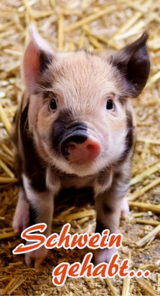 Schwein gehabt - kleines Glücksschwein
