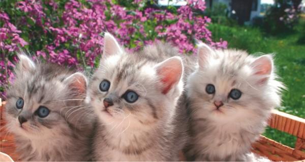 Drei Katzen auf Gartenbank