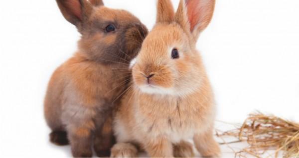 Zwei Kaninichen