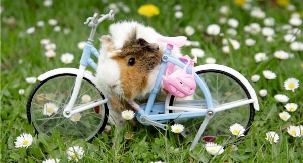 Hamster mit Dekofahrrad