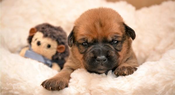 Ein Welpe mit Teddy