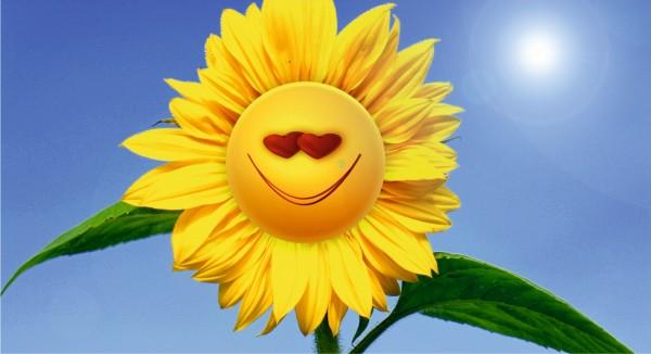 lachende Sonnenblume