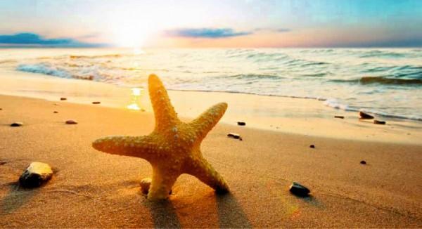 Seestern im Sand