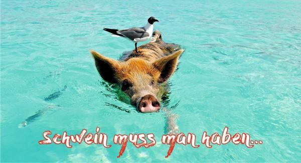 Vogel auf Schwein im Wasser