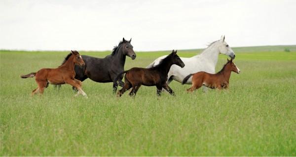 Pferdefamilie im Galopp