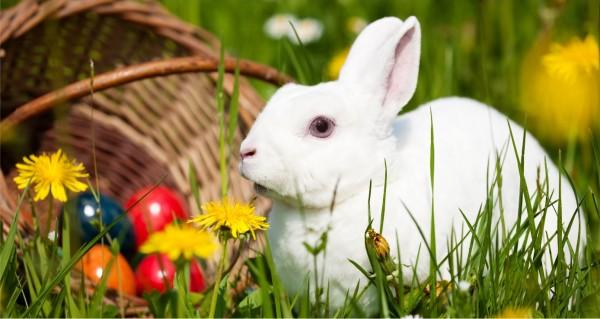 weißes Kaninchen mit Ostereierkorb
