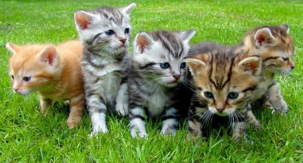 Fünf Kätzchen auf dem Rasen
