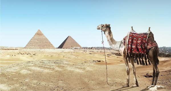 Kamel vor Pyramiden