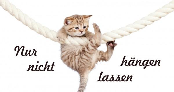 Nur nicht hängen lassen - Katze