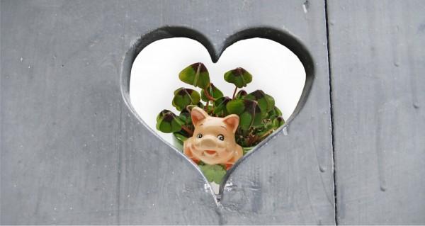 Schwein im Herz