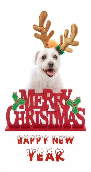 Merry Christmas Hund mit Geweih