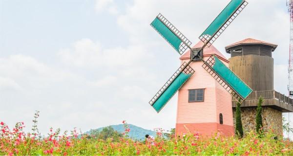 Windmühle hinter Blumenwiese