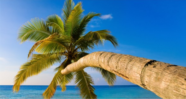 Palme ragt ins Wasser