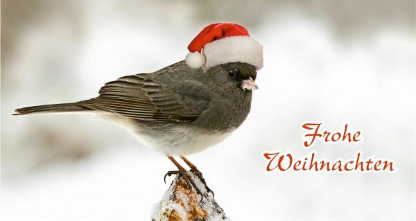 Vogel mit Weihnachtsmütze