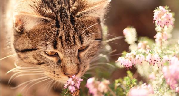 Eine Katze schnuppert an Blumen