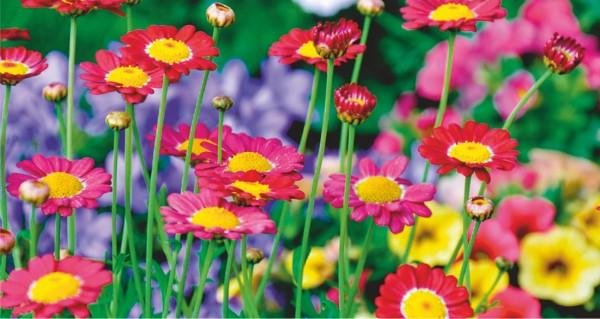 farbenreiche Blumenwiese