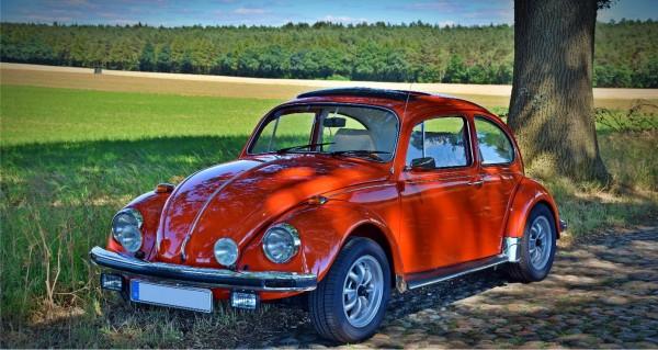 Ein Käfer am Feldweg